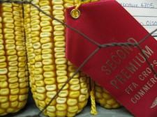 Red_corn